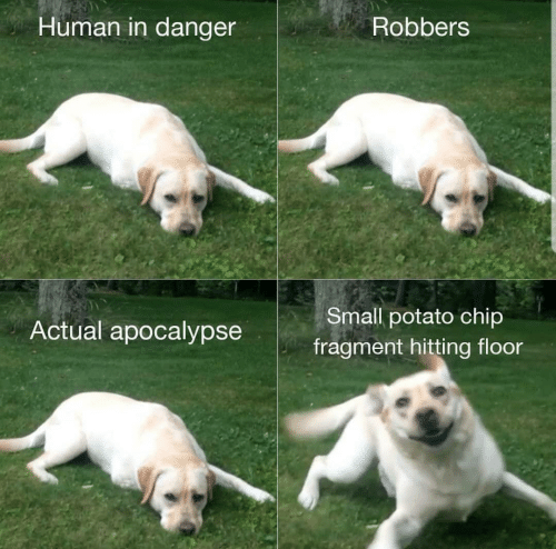 Potato, Chip, and Human: Human in danger  Robbers  Small potato chip  Actual apocalypse  fragment hitting floor