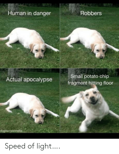 Potato: Human in danger  Robbers  Small potato chip  Actual apocalypse  fragment hitting floor  dognamedstella Speed of light….