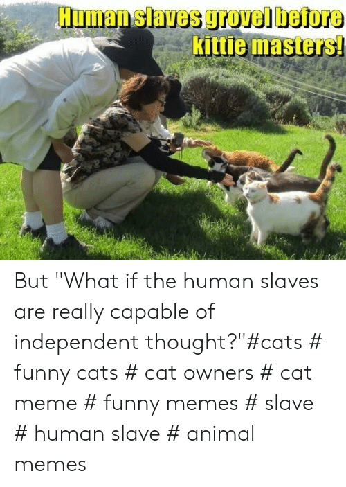 """Cats, Funny, and Meme: Human slaves grovel before  Kittie masters But """"What if the human slaves are really capable of independent thought?""""#cats # funny cats # cat owners # cat meme # funny memes # slave # human slave # animal memes"""