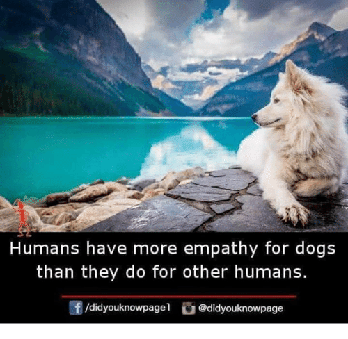 Dogs, Memes, and Empathy: Humans have more empathy for dogs  than they do for other humans.  /didyouknowpagel@didyouknowpage