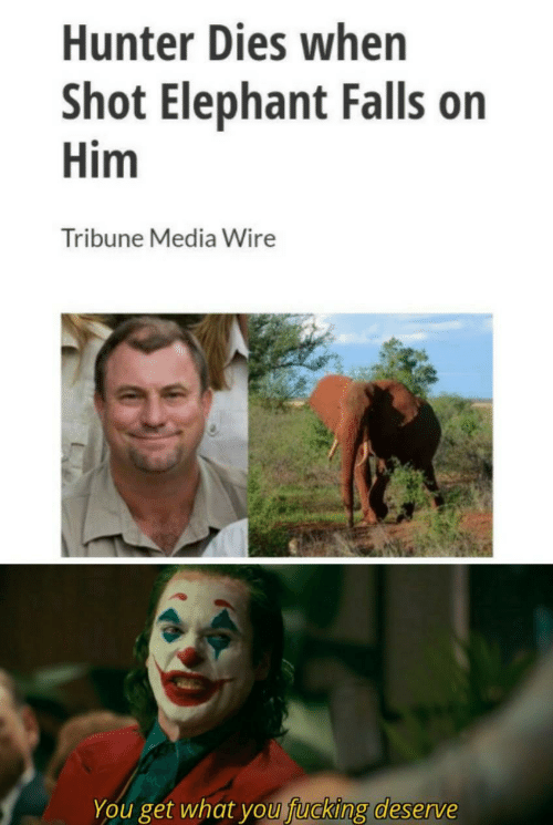 Elephant: Hunter Dies when  Shot Elephant Falls on  Him  Tribune Media Wire  You get what you fucking deserve