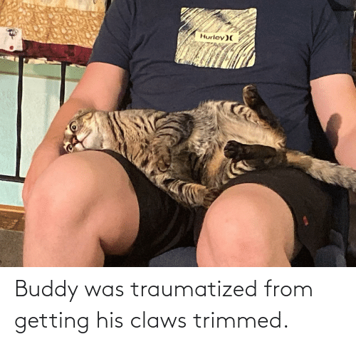 Traumatized: Hurley)( Buddy was traumatized from getting his claws trimmed.
