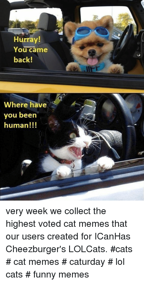 Cats, Caturday, and Funny: Hurray!  You came  back!  Where have  you beern  human!!! very week we collect the highest voted cat memes that our users created for ICanHas Cheezburger's LOLCats. #cats # cat memes # caturday # lol cats # funny memes