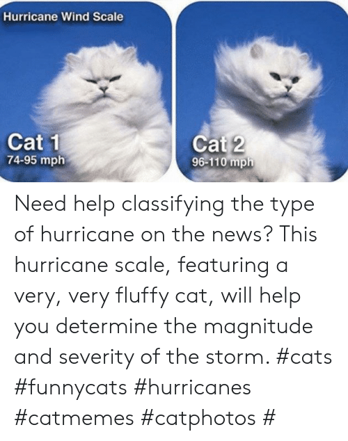 hurricanes: Hurricane Wind Scale  Cat 1  74-95 mph  Cat 2  96-110 mph Need help classifying the type of hurricane on the news? This hurricane scale, featuring a very, very fluffy cat, will help you determine the magnitude and severity of the storm. #cats #funnycats #hurricanes #catmemes #catphotos #