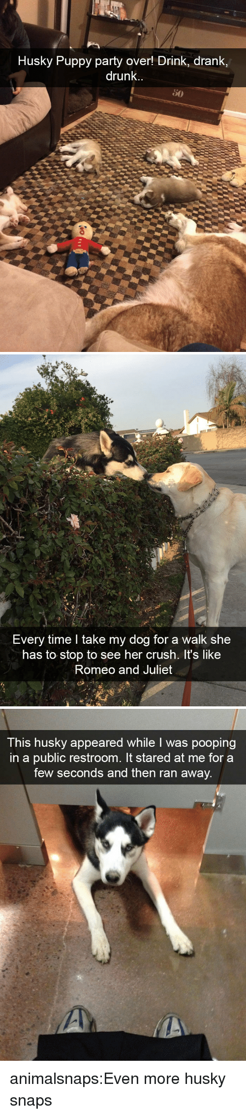 Husky Puppy: Husky Puppy party over! Drink, drank,  drunk.   Every time I take my dog for a walk she  has to stop to see her crush. It's like  Romeo and Juliet   This husky appeared while I was pooping  in a public restroom. It stared at me for a  few seconds and then ran away. animalsnaps:Even more husky snaps