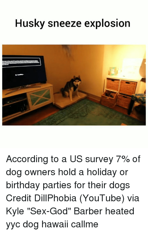 """Barber, Birthday, and Dogs: Husky sneeze explosion According to a US survey 7% of dog owners hold a holiday or birthday parties for their dogs Credit DillPhobia (YouTube) via Kyle """"Sex-God"""" Barber heated yyc dog hawaii callme"""