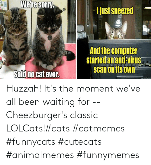 Waiting...: Huzzah! It's the moment we've all been waiting for -- Cheezburger's classic LOLCats!#cats #catmemes #funnycats #cutecats #animalmemes #funnymemes