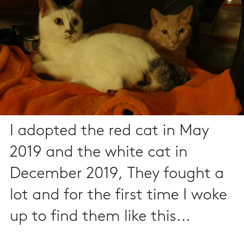 The First: I adopted the red cat in May 2019 and the white cat in December 2019, They fought a lot and for the first time I woke up to find them like this...