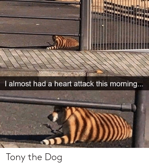 Heart, Dog, and Heart Attack: I almost had a heart attack this morning... Tony the Dog