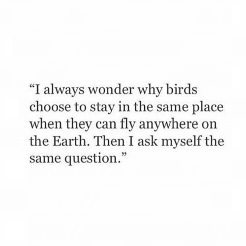"Birds: ""I always wonder why birds  choose to stay in the same place  when they can fly anywhere on  the Earth. Then I ask myself the  same question."""
