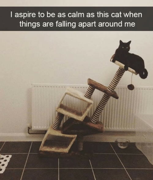 Cat, This, and Calm: I aspire to be as calm as this cat when  things are falling apart around me