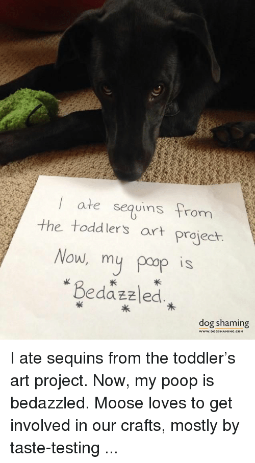 sequins: I ate sequins from  the toddlers art project  Now, my pop is  IS  Bedazzled  dog shaming  w.ooG  ING.COM  GSHAM I ate sequins from the toddler's art project. Now, my poop is bedazzled. Moose loves to get involved in our crafts, mostly by taste-testing ...
