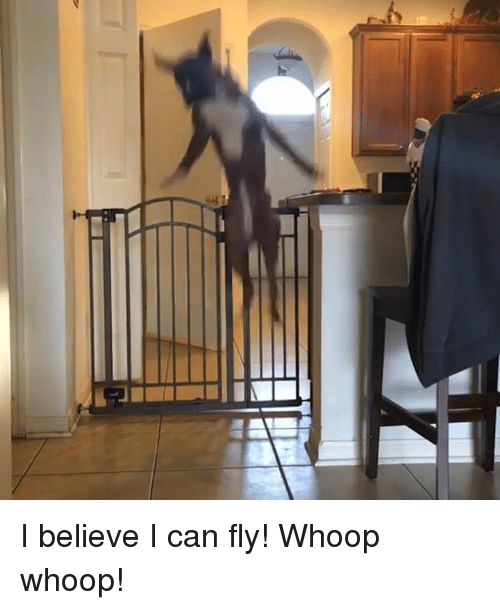 Memes, 🤖, and I Believe I Can Fly: I believe I can fly! Whoop whoop!