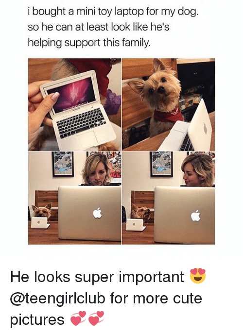 Cute, Family, and Girl: i bought a mini toy laptop for my dog.  so he can at least look like he's  helping support this family. He looks super important 😍 @teengirlclub for more cute pictures 💞💞