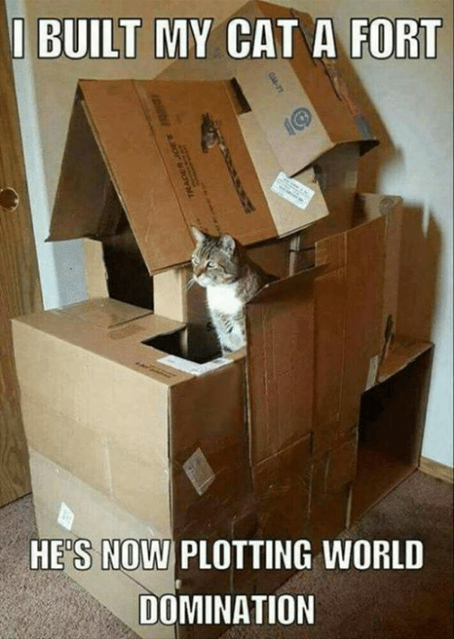 Dank, 🤖, and Cat: I BUILT MY CAT A FORT  HES NOWI PLOTTING WORL  DOMINATION