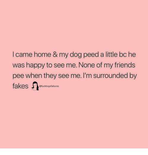Friends, Happy, and Home: I came home & my dog peed a little bc he  was happy to see me. None of my friends  pee when they see me. I'm surrounded by  @fuckboysfailures