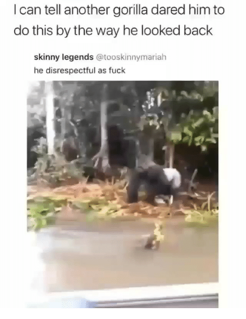 Memes, Skinny, and Fuck: I can tell another gorilla dared him to  do this by the way he looked back  skinny legends @tooskinnymariah  he disrespectful as fuck