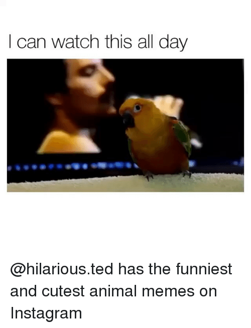 Instagram, Memes, and Ted: I can watch this all day @hilarious.ted has the funniest and cutest animal memes on Instagram