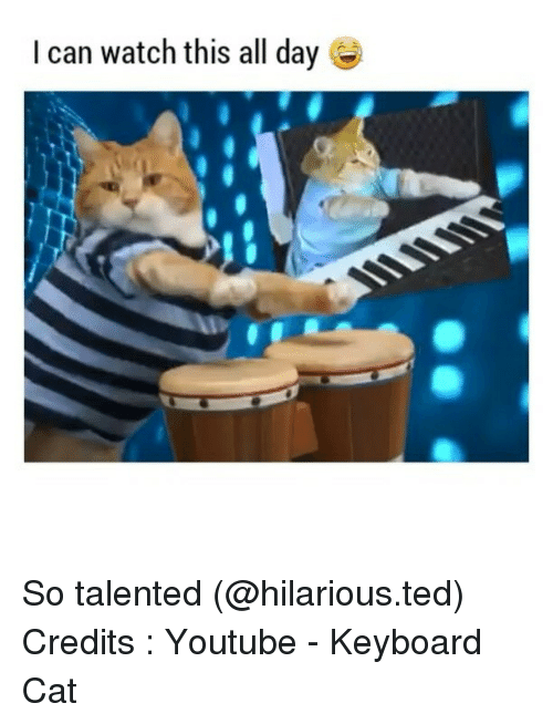 keyboard cat: I can watch this all day So talented (@hilarious.ted) Credits : Youtube - Keyboard Cat
