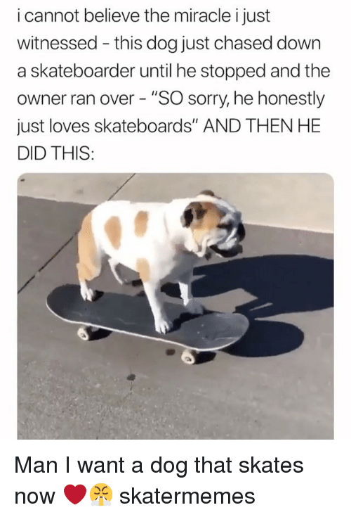 """Sorry, Skate, and Dog: i cannot believe the miracle i just  witnessed - this dog just chased down  a skateboarder until he stopped and the  owner ran over - """"SO sorry, he honestly  just loves skateboards"""" AND THEN HE  DID THIS: Man I want a dog that skates now ❤️😤 skatermemes"""