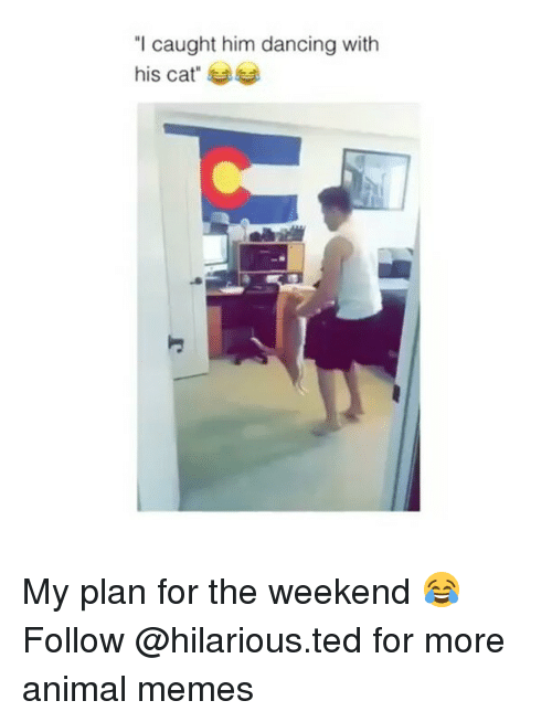 """Dancing, Funny, and Memes: """"I caught him dancing with  his cat"""" My plan for the weekend 😂 Follow @hilarious.ted for more animal memes"""