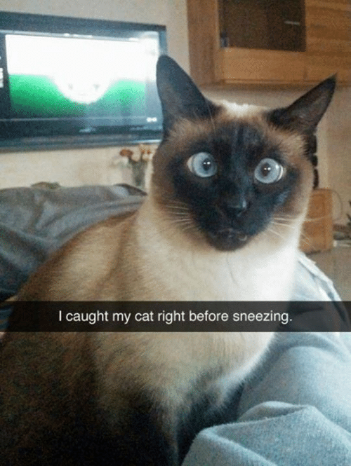 Memes, 🤖, and Cat: I caught my cat right before sneezing