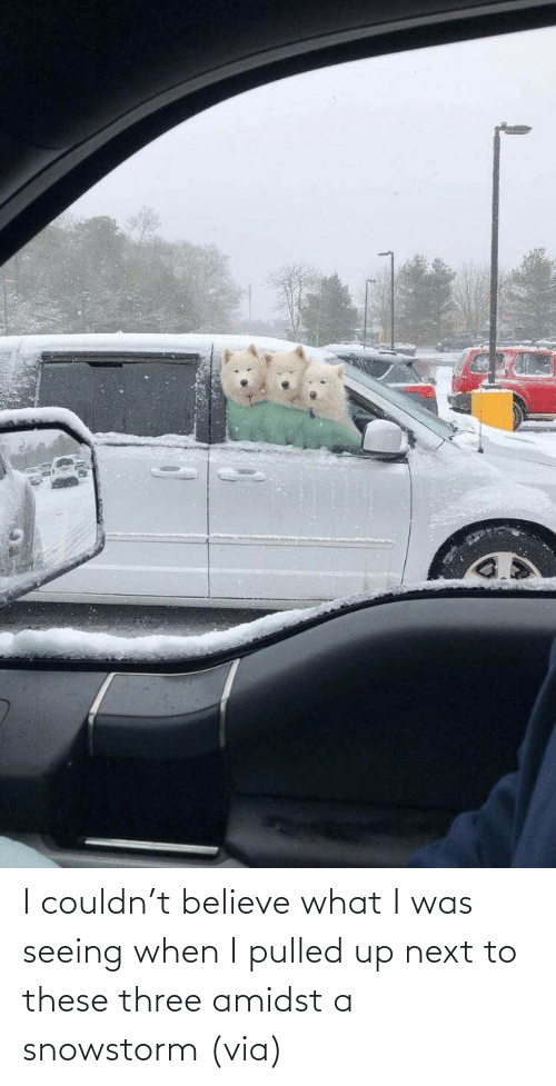 three: I couldn't believe what I was seeing when I pulled up next to these three amidst a snowstorm (via)