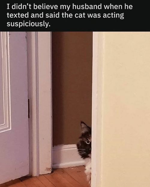 Memes, Husband, and Acting: I didn't believe my husband when he  texted and said the cat was acting  suspiciously.