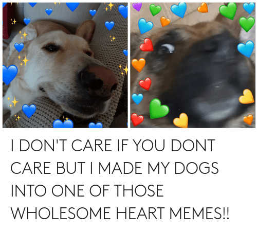 Heart Memes: I DON'T CARE IF YOU DONT CARE BUT I MADE MY DOGS INTO ONE OF THOSE WHOLESOME HEART MEMES!!