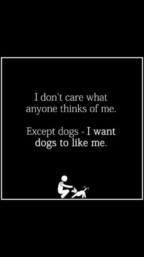 Dogs, Memes, and 🤖: I don't care what  anyone thinks of me.  Except dogs - I want  dogs to like me.