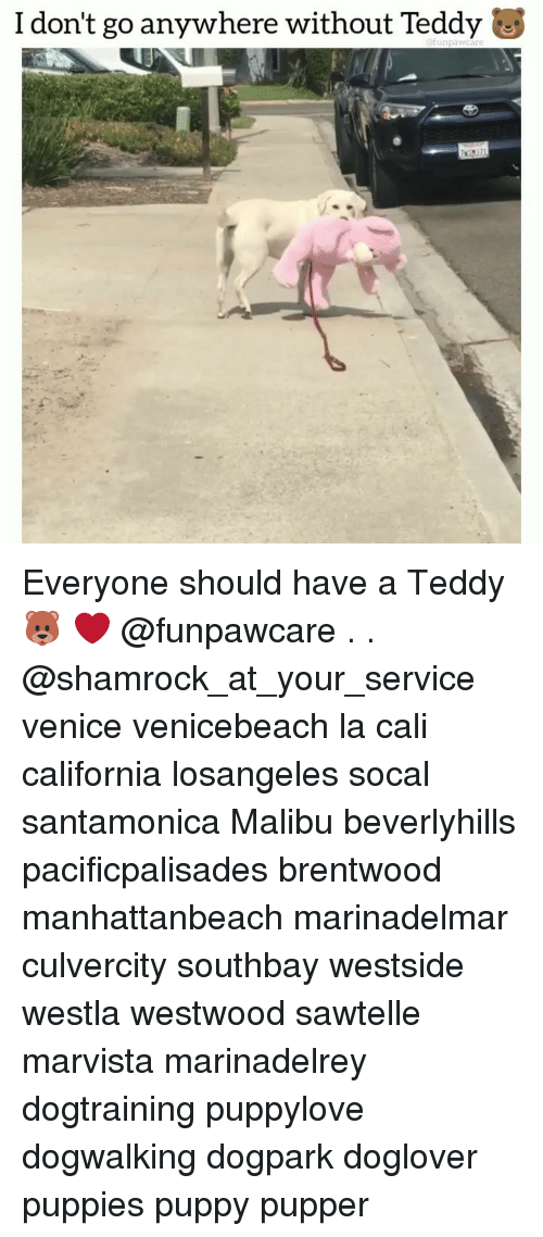 Memes, Puppies, and California: I don't go anywhere without Teddy Everyone should have a Teddy 🐻 ❤️ @funpawcare . . @shamrock_at_your_service venice venicebeach la cali california losangeles socal santamonica Malibu beverlyhills pacificpalisades brentwood manhattanbeach marinadelmar culvercity southbay westside westla westwood sawtelle marvista marinadelrey dogtraining puppylove dogwalking dogpark doglover puppies puppy pupper