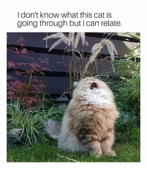 Relationships, Cat, and Can: I don't know what this cat is  going through but I can relate.