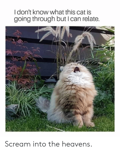 Dank, Scream, and 🤖: I don't know what this cat is  going through but I can relate. Scream into the heavens.