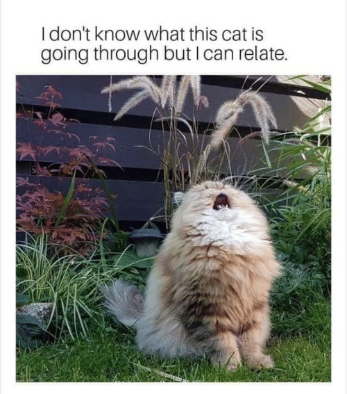 Cat, Can, and What: I don't know what this cat is  going through but I can relate.