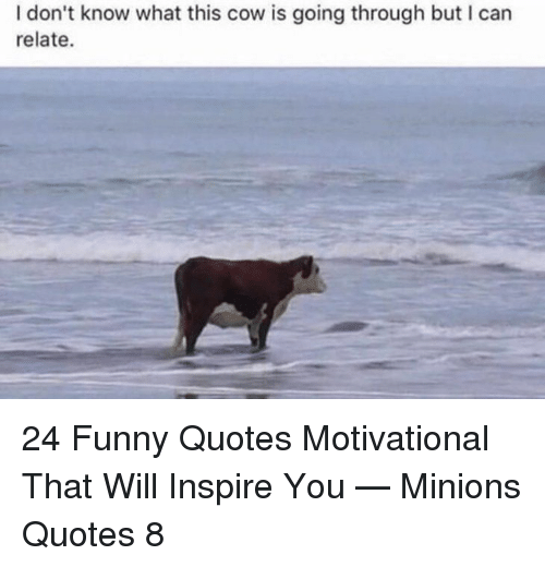 Funny, Minions, and Quotes: I don't know what this cow is going through but I carn  relate. 24 Funny Quotes Motivational That Will Inspire You — Minions Quotes 8