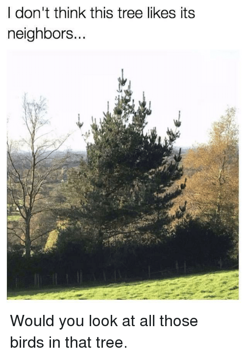 I Don't Think This Tree Likes Its Neighbors | Funny Meme on
