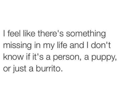 Life, Memes, and Puppy: I feel like there's something  missing in my life and I don't  know if it's a person, a puppy,  or just a burrito.