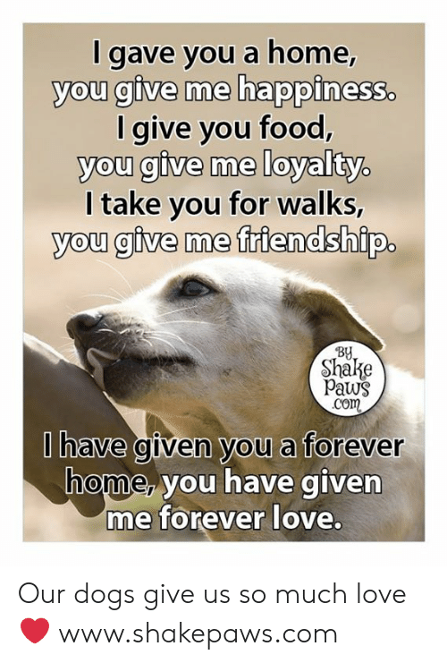 Dogs, Food, and Love: I gave you a home,  you give me happiness.  I give you food,  you give me loyalty.  I take you for walks,  you give me friendship.  By  Shake  Paws  Com  Ihave given you a forever  home, you have given  me forever love. Our dogs give us so much love ❤️ www.shakepaws.com