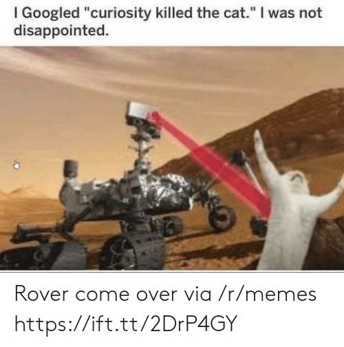 "I Googled: I Googled ""curiosity killed the cat."" I was not  disappointed. Rover come over via /r/memes https://ift.tt/2DrP4GY"