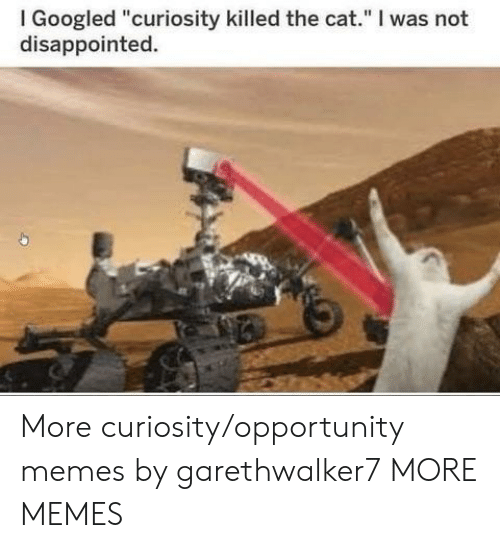 "I Googled: I Googled ""curiosity killed the cat."" I was not  disappointed. More curiosity/opportunity memes by garethwalker7 MORE MEMES"