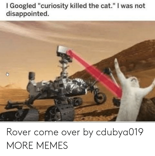 "I Googled: I Googled ""curiosity killed the cat."" I was not  disappointed. Rover come over by cdubya019 MORE MEMES"