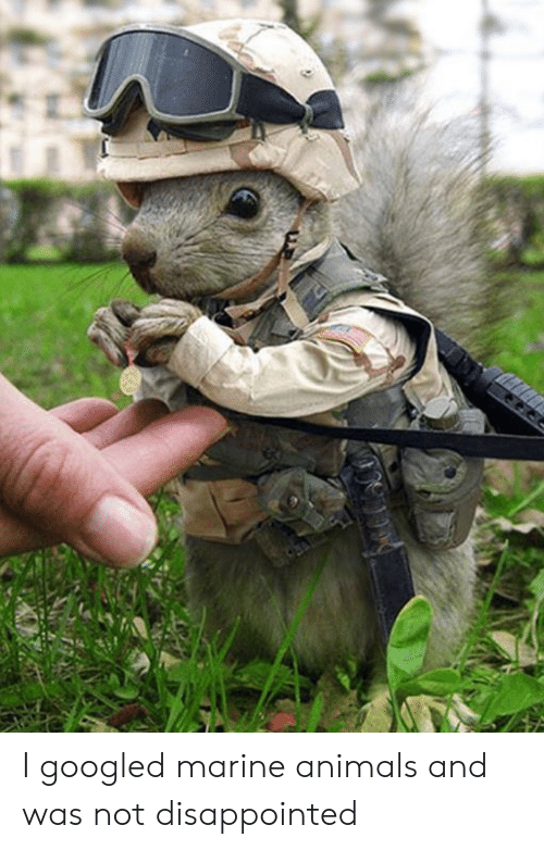 I Googled: I googled marine animals and was not disappointed