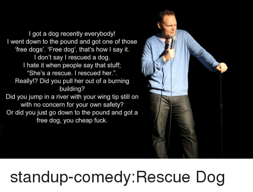 """Dogs, Tumblr, and Say It: I got a dog recently everybody!  I went down to the pound and got one of those  free dogs'. 'Free dog', that's how I say it.  I don't say I rescued a dog.  I hate it when people say that stuff,  """"She's a rescue. I rescued her."""".  Really!? Did you pull her out of a burning  building?  Did you jump in a river with your wing tip still on  with no concern for your own safety?  Or did you just go down to the pound and got a  free dog, you cheap fuck.  3 standup-comedy:Rescue Dog"""