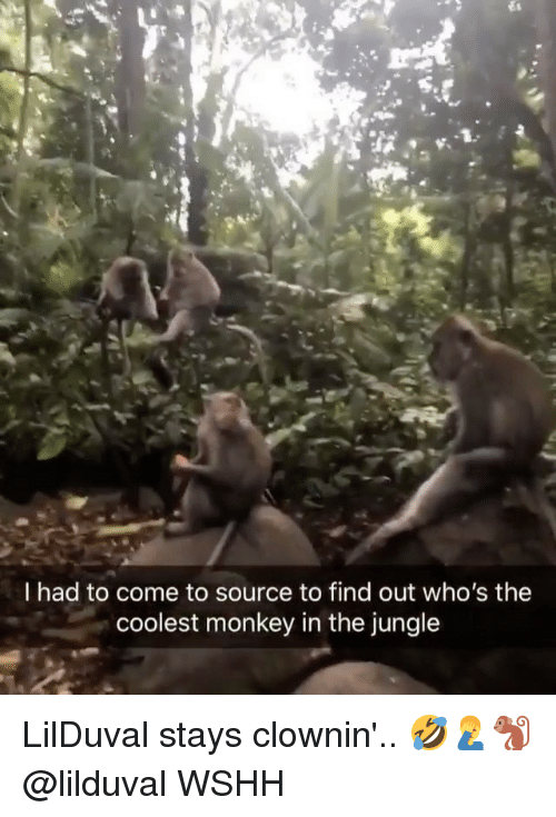 Memes, Wshh, and Monkey: I had to come to source to find out who's the  coolest monkey in the jungle LilDuval stays clownin'.. 🤣🤦♂️🐒 @lilduval WSHH