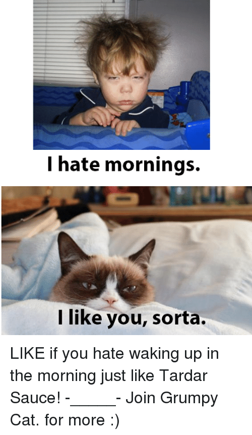 Grumpy Cat, Sauce, and Cat: I hate mornings.  like you, sorta. LIKE if you hate waking up in the morning just like Tardar Sauce! -_____- Join Grumpy Cat. for more :)