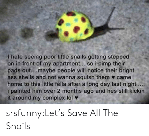 pads: I hate seeing poor little snails getting stepped  on in front of my apartment... so i pimp their  pads out....maybe people will notice their bright  ass shells and not wanna squish them ф came  home to this little fella after a long day last night.....  i painted him over 2 months ago and hes still kickin  it around my complex lol srsfunny:Let's Save All The Snails
