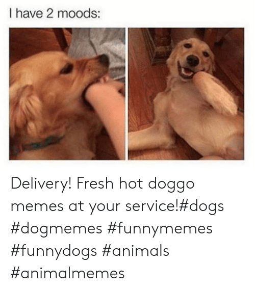 Animals, Dogs, and Fresh: I have 2 moods: Delivery! Fresh hot doggo memes at your service!#dogs #dogmemes #funnymemes #funnydogs #animals #animalmemes