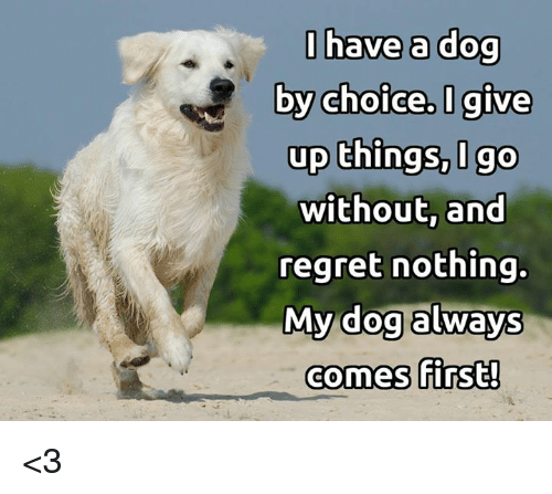 Memes, Regret, and 🤖: I have a dog  by choice. I give  up things, go  without an  regret nothing.  My dog always  comes first! <3