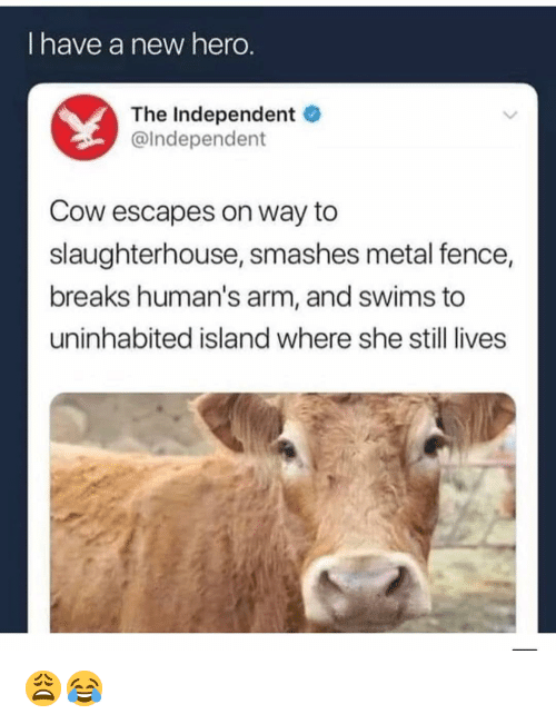 Memes, Slaughterhouse, and Metal: I have a new hero  The Independent  @Independent  Cow escapes on way to  slaughterhouse, smashes metal fence  breaks human's arm, and swims to  uninhabited island where she still lives 😩😂