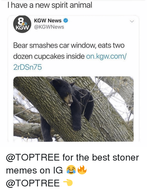 Memes, News, and Animal: I have a new spirit animal  8  KGW  KGW News  @KGWNews  Bear smashes car window, eats two  dozen cupcakes inside on.kgw.com/  2rDSn75 @TOPTREE for the best stoner memes on IG 😂🔥 @TOPTREE 👈
